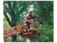 Обрезка деревьев (кронирование)